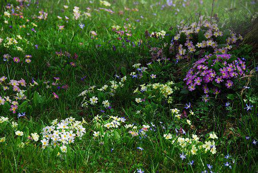 Plant, Nature, Grass, Meadow, Garden, Spring, Flowers
