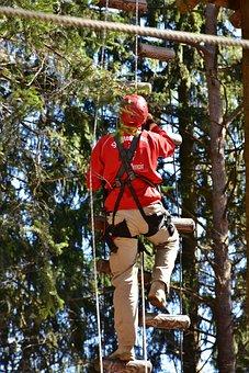 Tree, Wood, Human, Man, Rise, Adult, Hang, Variety