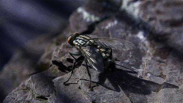 Fractalius, Carnivore, Fly, Nature, Insect, Animal