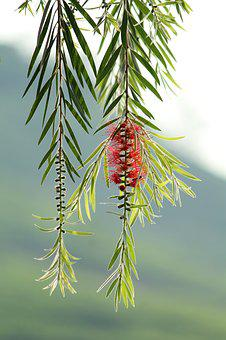 Nature, Tree, Flora, Summer, Branch, Leaf, Outdoors