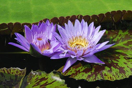 Plant, Flower, Nature, Puddle, Flowers, Leaf, Garden