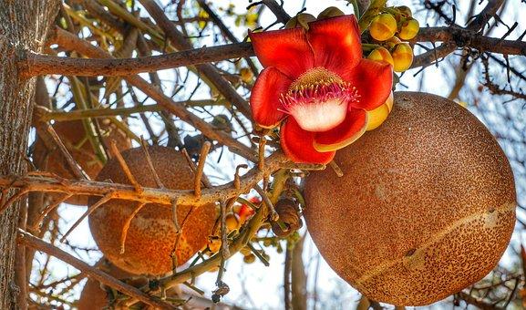 Cannon, Ball, Tree, Flower, Multicolour, Season, Nature