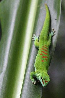 Reptile, Lizard, Animal World, Nature, Animal, Gecko