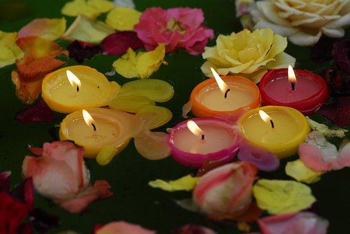 Flower, Nature, Color, Leaf, Garden, Candles, Roses