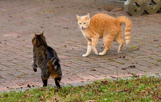Animal, Mammal, Cute, Nature, Cat, Pet, Confrontation