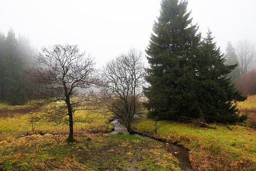 Nature, Tree, Landscape, Grass, Panorama, Wood, Idyllic