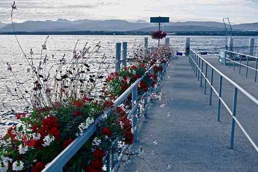 Pier, Jetty, Flowers, Blossoms, Water, Nature, Sea