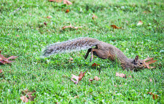 Nature, Grass, Wildlife, Animal, Outdoors, Squirrel