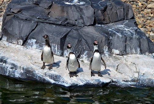 Penguins, Bird, Zoo, Animal, Nature