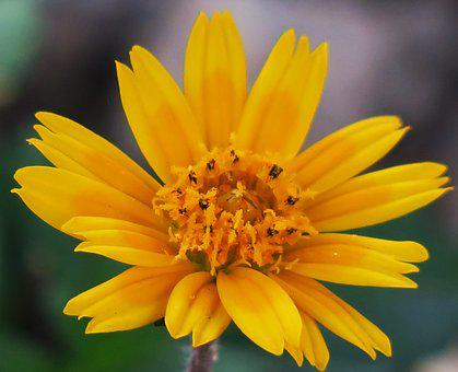 Flower, Nature, Plant, Petal, Summer, Bloom, Pollen