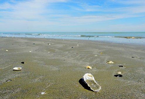 Sea, Beach, Waters, Sand, Coast, Seashell