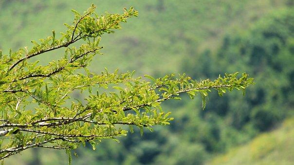 Tree, Nature, Season, Flora, Leaf, Summer, Growth