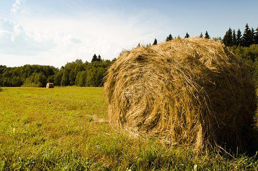 Nature, Hay, Field, Straw, Agriculture, Haystack