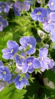 Nature, Flora, Garden, Flower, Summer, Color, Closeup