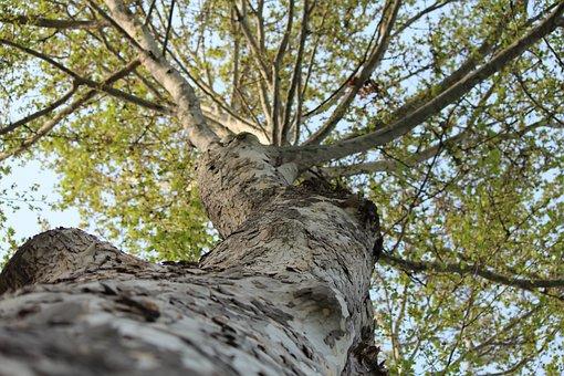 Tree, Nature, Wood, Bark, Outdoors, Plant, Landscape