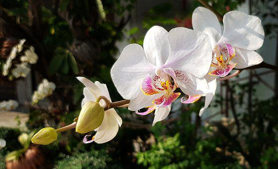 Orchid, White, Red, Flower, Flora, Tropical, Petal