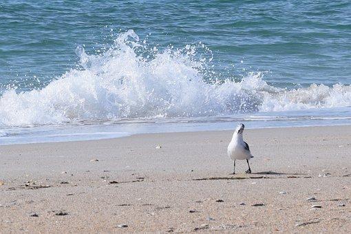 Sea, Beach, Ocean, Water, Seashore, Surf, Shore