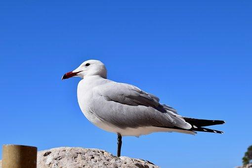 Birds, Nature, Outdoors, Wild Life, Sky, Seagull