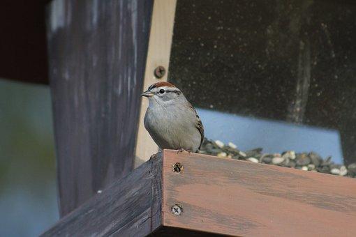 Outdoors, Bird, Nature, Wildlife, Bird Feeder, Sparrow