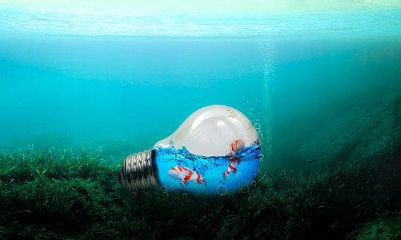 Water, Fish, Ocean, Underwater, Blue