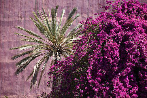 Bougainville, Summer, Palm, Flowers, Bloom