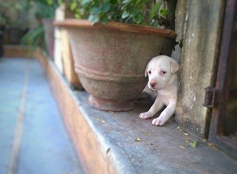 Dog, Cute, Mammal, Little