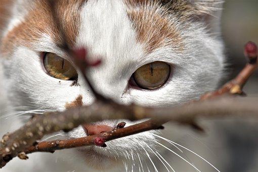 Cat, Cute, Animal, Portrait, Eye, Close, Face, Nose