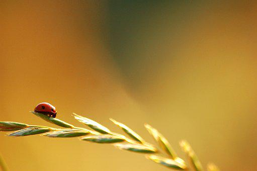 Nature, Blur, Dawn, Sun, Insect, Ladybug, Luck, Summer