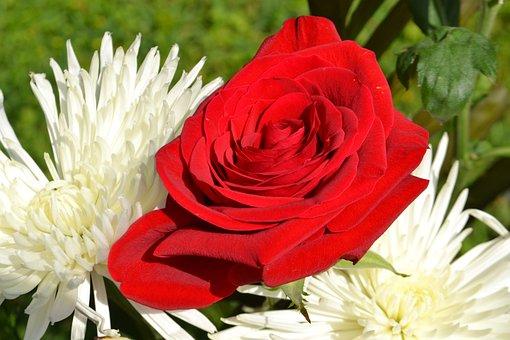 Flower, Nature, Flora, Summer, Floral, Bouquet