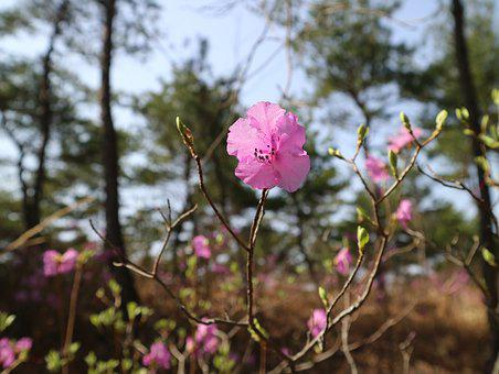 Flowers, Nature, Plants, Wood, Outdoors, Wildlife