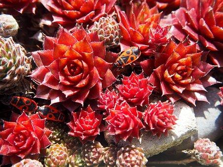 Flower, Nature, Plant, Color, Rose, Garden, Beetle, Red
