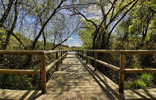 Doñana, Natural Park, Gateway, Huelva, Wood, Tree