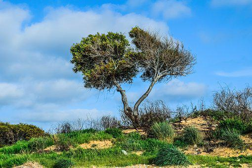 Trees, Dune, Landscape, Nature, Sky, Clouds
