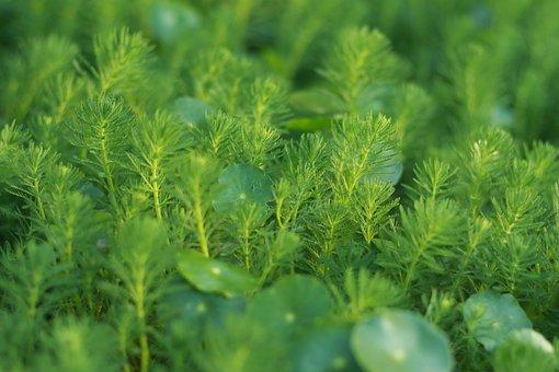 Plant, Nature, Leaf, Environment, Spring