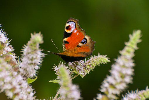 Nature, Insect, Living Nature, Sheet, Outdoors