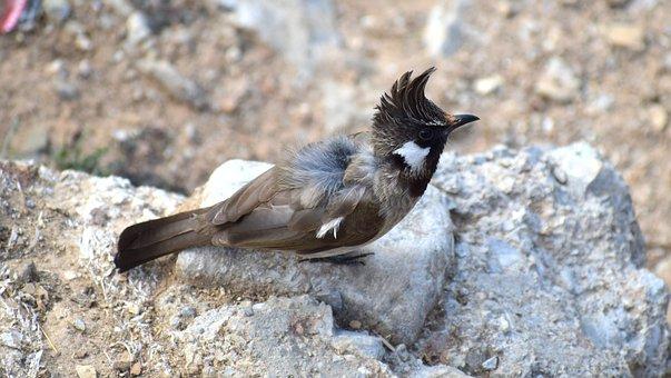 Nature, Wildlife, Animal, Bird, Outdoors, Wild, Feather