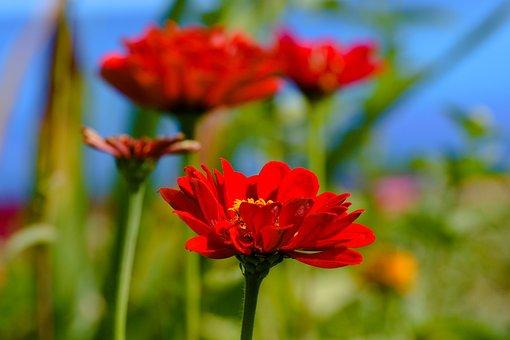 Nature, Sheet, Outdoors, Summer, Plant, Garden, No One