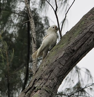Tree, Nature, Bird, Wood, Wildlife, Outdoors, Wild