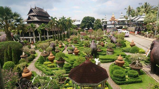 Garden, Flora, Flower, Tree, Travel, Nature, Palm
