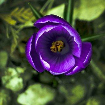 Flower, Nature, Plant, Garden, Petal, Flowers, Color