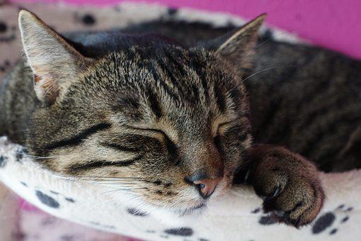 Animal, Cat, Cute, Mammal, Pet, Portrait, Fur, Kitten