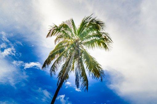Tropical, No Person, Sky, Arecaceae, Summer, Idyllic