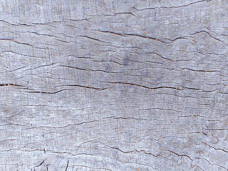 Texture, Wood, Tree, Wood Texture Background, Timber