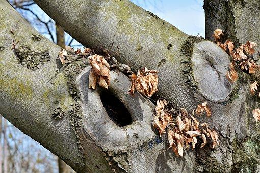 Tree, Knothole, Gnarled, Tree Eyes, Log, Hole, Old