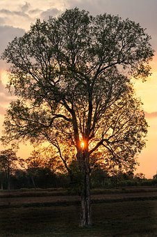 Tree, Silhouette, Sunset, Late, Evening, Dusk
