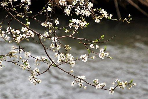 Branch, Tree, Flower, Season, The Freshness, Blooming