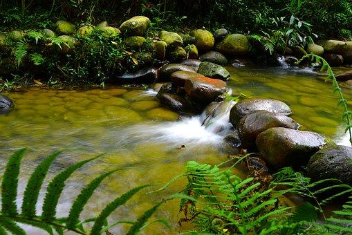Nature, Waters, Flow, Falls, Wood, Leaf, Tropical