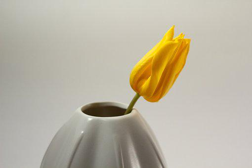 Tulip, Vase, Grow, Yellow, Blossom, Bloom, Stengel