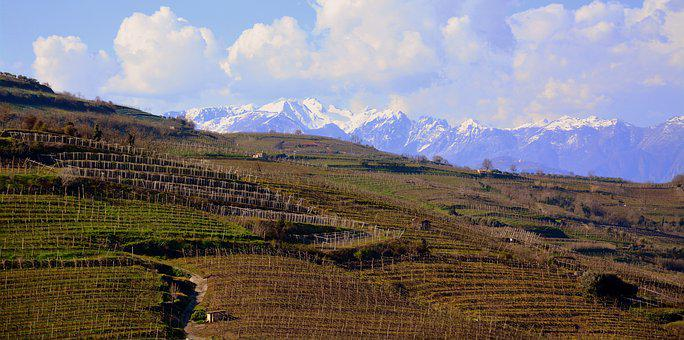 Vineyard, Hill, Tops, Snow, Mountain, Panoramic, Nature