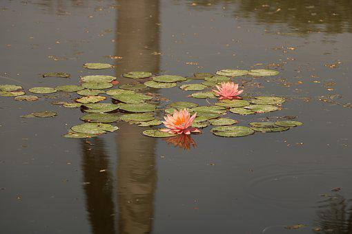 Pool, Water, Reflection, Lake, Lotus, Lily, Floating